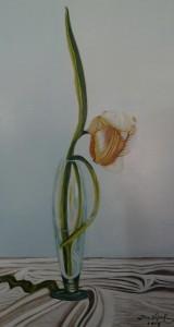 tulipano-